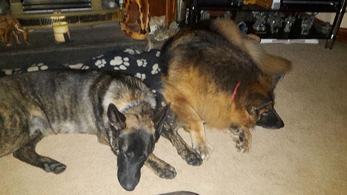Samson+Sadie