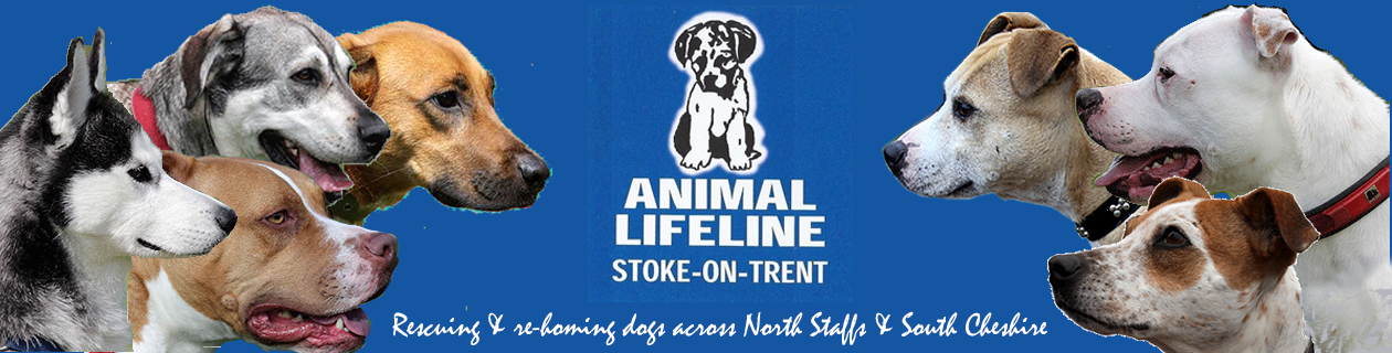 Animal Lifeline –  Rescuing & Re-homing Dogs